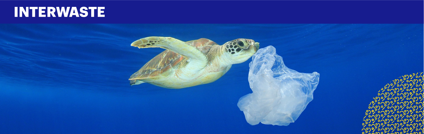 Image of a sea turtle eating a plastic bag
